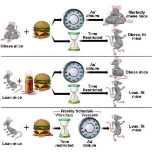 Obesity diagram