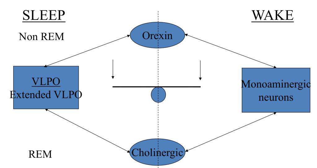 orexin and sleep wake regulation
